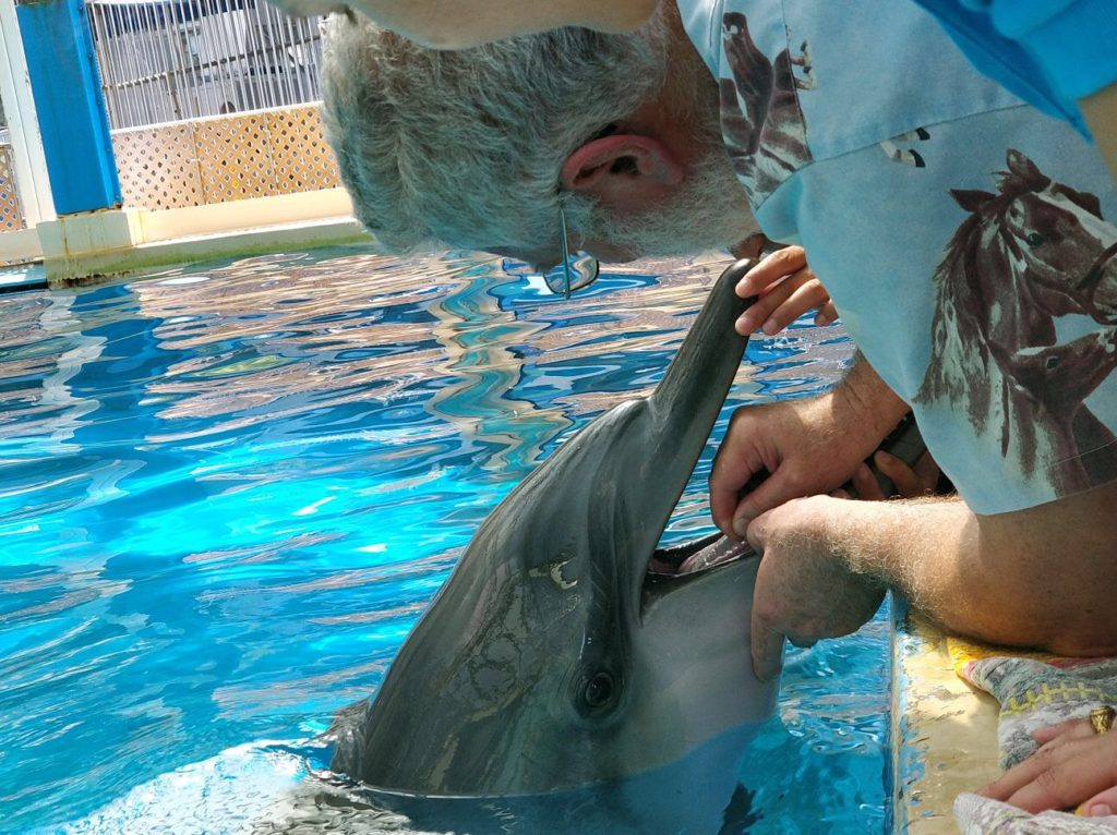 Pulpectomy on a dolphin